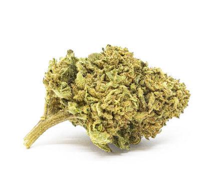 Gorilla Glue Cannabis Light