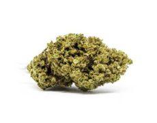 master kush marijuana legale