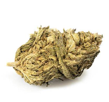 Fiore Cannabis Light CBD DO SI DOS - JustBob!
