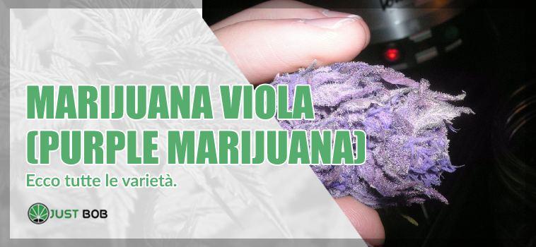 marijuana viola