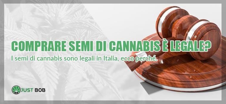 legalità in merito all'acquisto di semi di cannabis online