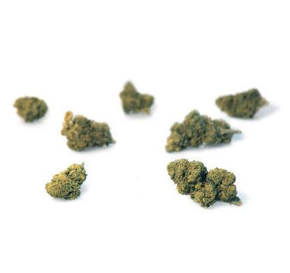 mango-haze-cannabis-light-marijuana-legale