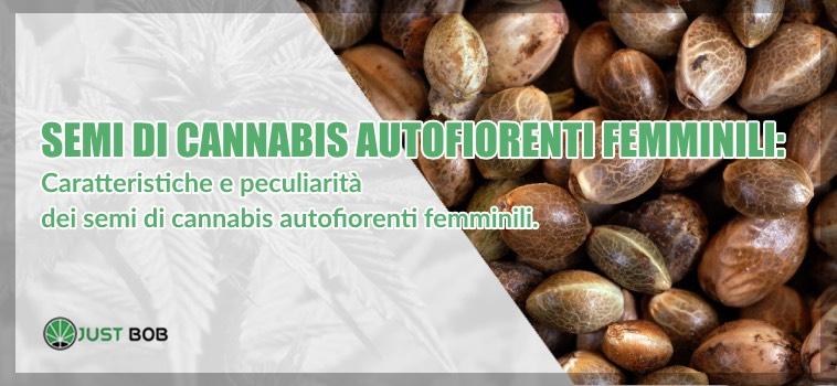 semi di cannabis autofiorenti femminili
