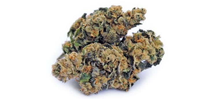 marijuana do si dos e OG Kush breath genetica
