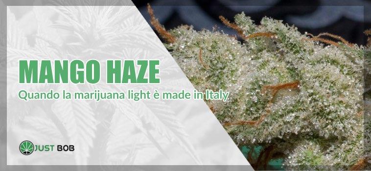 mango Haze legale justbob