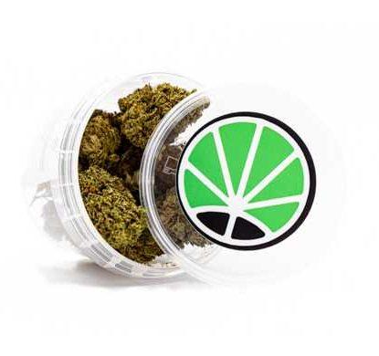 cannabis-master-kush-marijuana-cbd