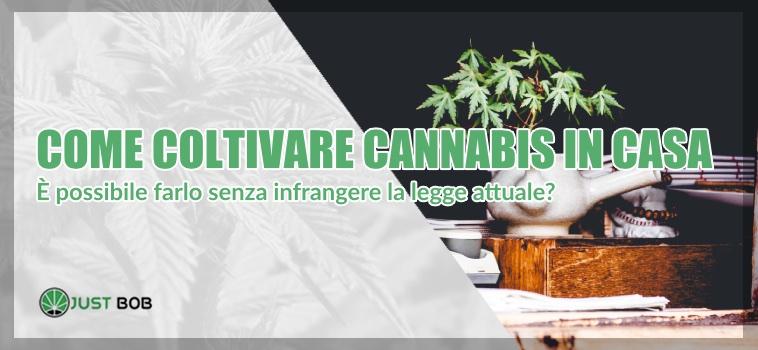 come coltivare cannabis in italia
