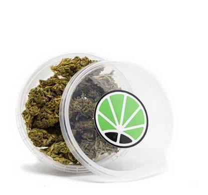 white widow cannabis italia marijuana legale erba legale