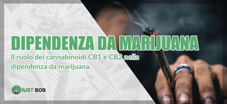 dipendenza da marijuana legale