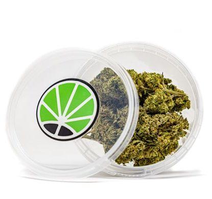 gorilla glue shop cannabis legale