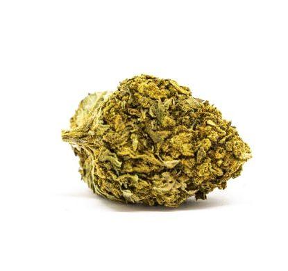 lemon cheese cannabis light italia