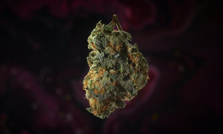 legalizzazione cannabis light situazione italia